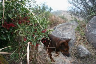 Red Berries and Barka