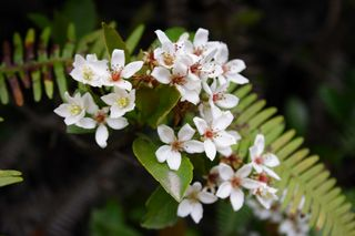 Waxy flowers