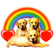 Labs Rainbows