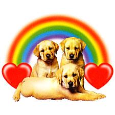 Labs Rainbows