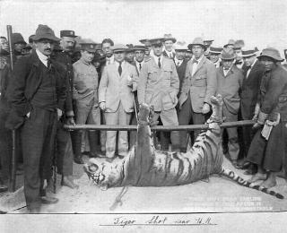 Tiger Shot in Fan Ling 1915