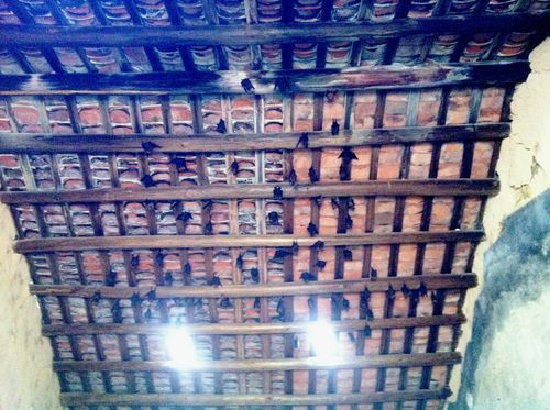Bats at To Kwa Peng
