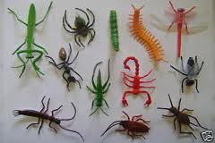 Scary Bugs