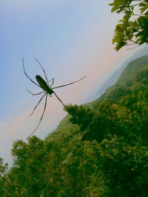 Maculata at Fire Lookout