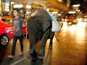 Baby Bangkok Elephant