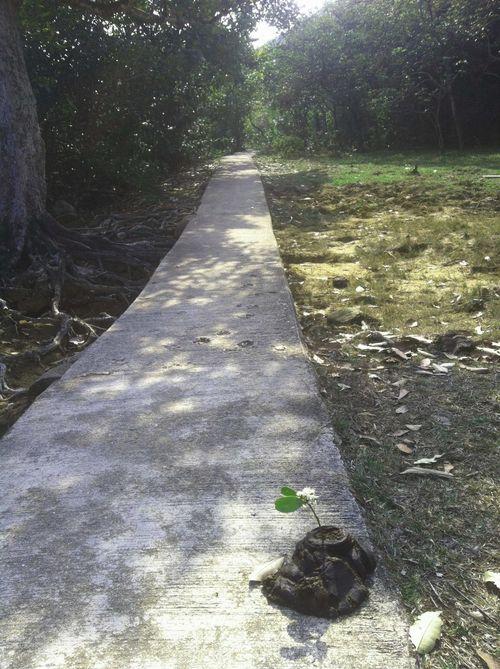 Path Shek Keng