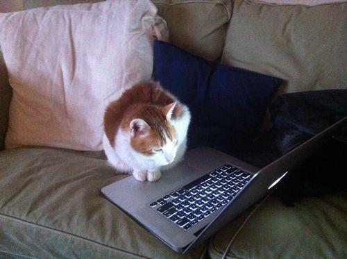 Cat Dooley