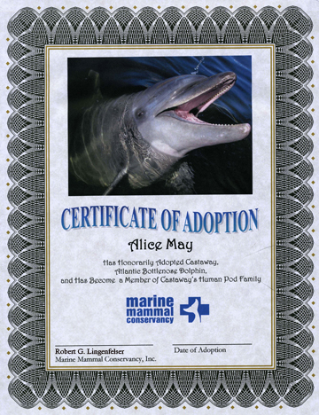 Adopt a Dolphin Adoption Certificate