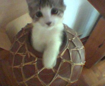 Mini-Kitty 100804